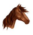 horse animal brown stallion racehorse icon vector image vector image