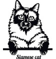 siamese cat - cat breed cat breed head isolated vector image vector image