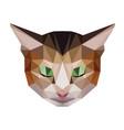 brown cat low polygon head vector image