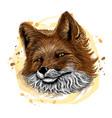 fox color graphic hand-drawn portrait a cute vector image vector image
