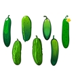 Fresh prickly green cucumber vegetables vector image vector image