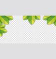 green leaf wallpaper on desktop isolated vector image vector image
