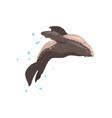 fur seal performing in public in dolphinarium or vector image vector image