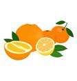mandarines tangerine clementine orange lemon vector image