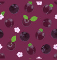 plum fruits seamless pattern with flower on vector image