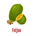 Feijoa exotic isolated fruit vector image vector image