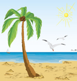 Palm tree on sand beach vector image