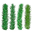 set spruce and fir tree branches - christmas vector image