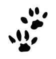 chaus footprint vector image vector image