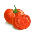 drawing tomato with slice vector image vector image
