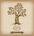 olive tree on vintage paper olive oil vector image