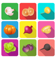 set of icons on a theme vegetables vector image vector image