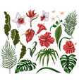tropical flowers and leaves such as banana palm vector image