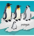 Three big penguins and one little penguin vector image