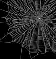 Cobweb Background vector image