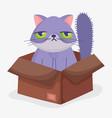 cute cat face sad in box domestic cartoon animal vector image vector image