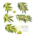 Set of backgrounds with green olives vector image