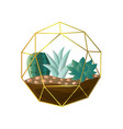 round geometric terrarium with green succulent vector image vector image