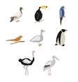 set of cartoon birds vector image vector image