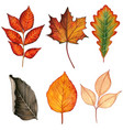 watercolor colorful hand drawn fall leaves vector image