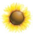 Beautiful sunflower isolated on white vector | Price: 3 Credits (USD $3)
