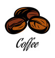 color a coffee bean vector image vector image