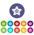 flower star icon simple style vector image