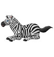 happy zebra cartoon lay down vector image