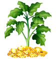 Plant growing on money vector image vector image