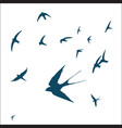 swallow bird set vector image vector image