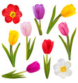tulip icons vector image