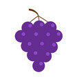 fresh grape brunch icon healthy food lifestyle vector image