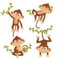 set of isolated monkey hanging on vine vector image vector image
