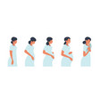 stages pregnancy concept vector image