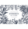 evergreen plants collection vector image vector image
