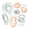 shell hand draw sketch seafood set vector image