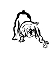bulldog playing vector image vector image