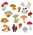 fresh autumn mushrooms and toadstools cartoon vector image