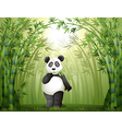 Cartoon panda bamboo forest