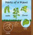 parts of a plant vector image vector image