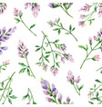 watercolor seamless pattern with alfalfa vector image vector image