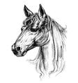 Horse head drawing vector image vector image