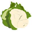 isolated cauliflower vegetable vector image vector image