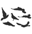 set bird pigeon flies black silhouettes vector image