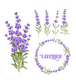 set lavender flowers elements vector image vector image