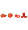 tomato collection photo realistic fresh red ripe vector image