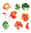Collection of watercolor nasturtium flowers vector image