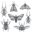 collection hand drawn insects moth vector image