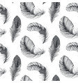 seamless pattern with natural bird feathers vector image vector image