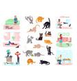 big bundle cats vector image vector image